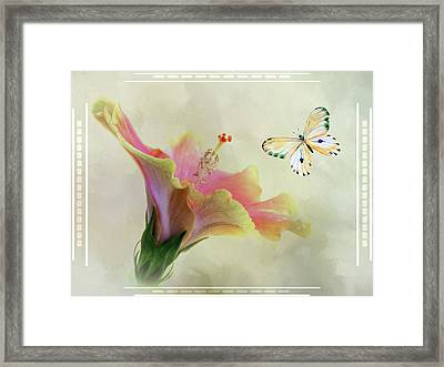 Butterfly And Fiesta Hibiscus Framed Print