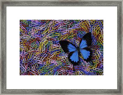 Butterfly And Paperclips Framed Print by Garry Gay