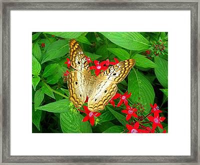 Butterfly And Red Star Sprig Framed Print by Caroline  Urbania Naeem