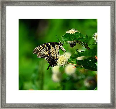 Butterfly And The Bee Sharing Framed Print
