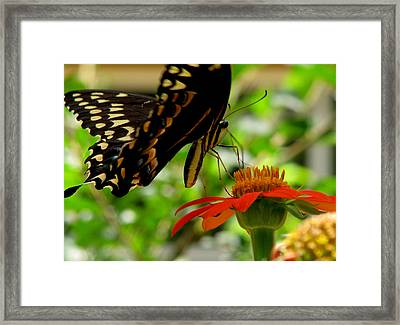 Butterfly And The Flower Framed Print by Dottie Dees