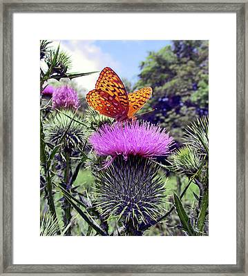 Butterfly And Thistle Flower Framed Print