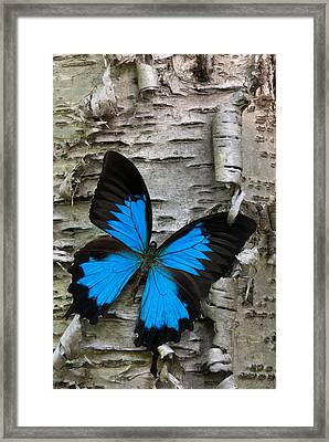 Butterfly Framed Print by Andreas Freund