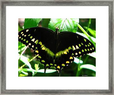 Butterfly Art 3 Framed Print by Greg Patzer