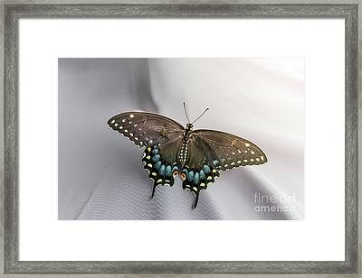 Butterfly At Picnic Framed Print