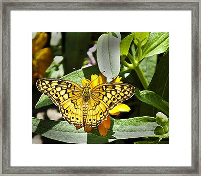 Framed Print featuring the photograph Butterfly At Rest by Bill Barber