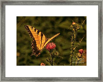 Butterfly At Sunset Framed Print by Kathy Liebrum Bailey