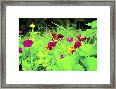 Butterfly At Work Framed Print by Jill Tennison