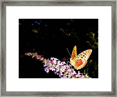 Butterfly Banquet 1 Framed Print by Will Borden