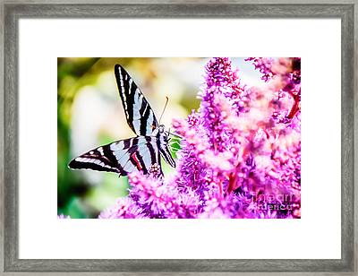 Butterfly Beautiful  Framed Print