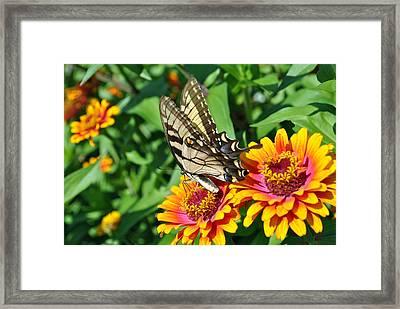 Butterfly Beauty Framed Print by Dion Baker