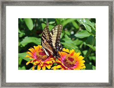 Butterfly Beauty II Framed Print by Elizabeth Del Rosario-Baker