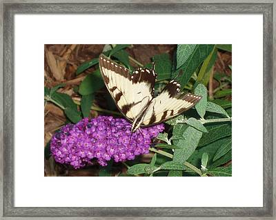 Framed Print featuring the photograph Butterfly Beauty Yellow by Kicking Bear  Productions