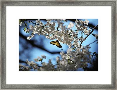 Butterfly Blossom Framed Print by Nathan Grisham
