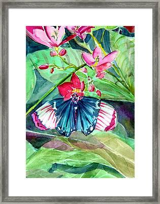 Butterfly Buffet Framed Print by Mindy Newman