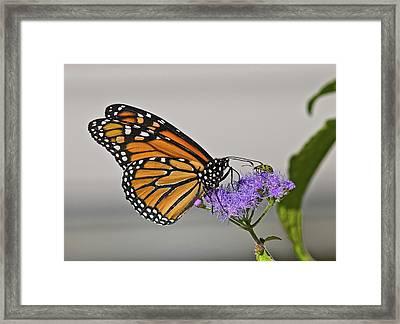 Butterfly Bug Inspector Framed Print