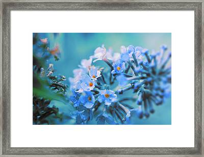 Framed Print featuring the photograph Butterfly Bush by Douglas MooreZart