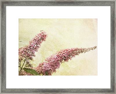 Framed Print featuring the digital art Butterfly Bush by Margaret Hormann Bfa