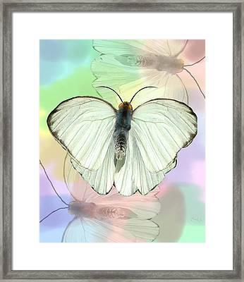 Butterfly, Butterfly Framed Print by Rosalie Scanlon
