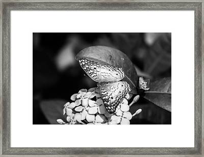 Butterfly Bw - Ins18 Framed Print by G L Sarti
