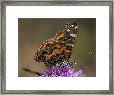 Framed Print featuring the photograph Butterfly by Cathy Harper