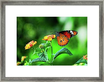 Butterfly Framed Print by Chaza Abou El Khair