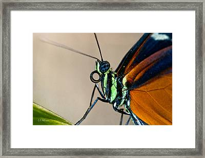 Butterfly Closeup Framed Print by Christopher Holmes