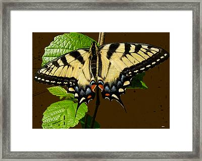 Butterfly Collection Design Framed Print by Debra     Vatalaro