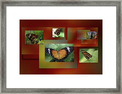 Framed Print featuring the photograph Butterfly Colllage by Irma BACKELANT GALLERIES