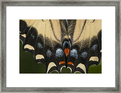 Butterfly Colors Framed Print