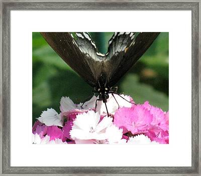 Butterfly Cup Framed Print by Debra     Vatalaro
