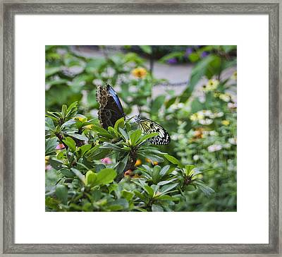 Butterfly Dance Framed Print by Christina Durity