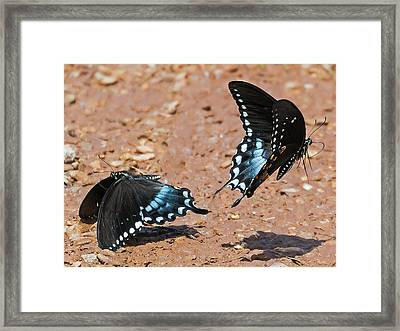 Framed Print featuring the photograph Butterfly Dance by Ron Dubin