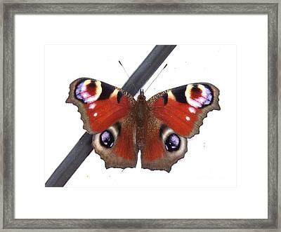 Butterfly Framed Print by Deborah Brewer