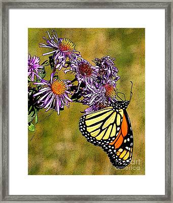 Butterfly Delight Framed Print by Diane E Berry