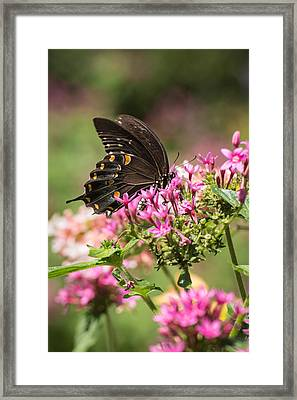 Framed Print featuring the photograph Butterfly Dream by Julie Andel
