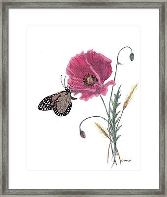 Framed Print featuring the painting Butterfly Dreaming by Stanza Widen