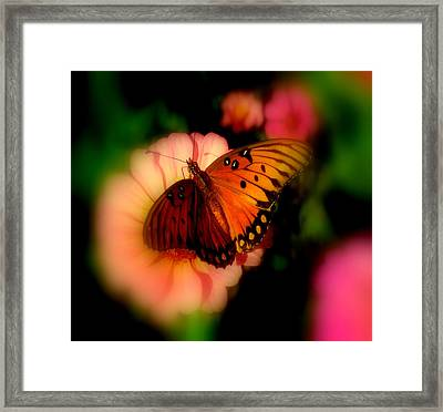 Butterfly Dreams Framed Print by Dottie Dees