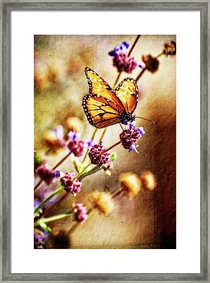 Butterfly Dreams Framed Print by Saija  Lehtonen