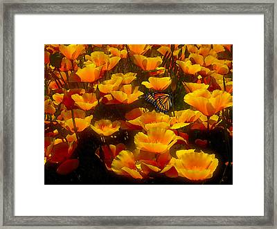 Butterfly Effect Framed Print by Robby Donaghey