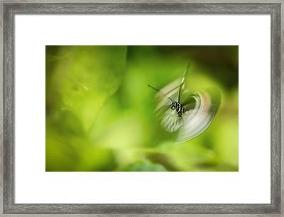 Butterfly Enegry Framed Print by Jennifer