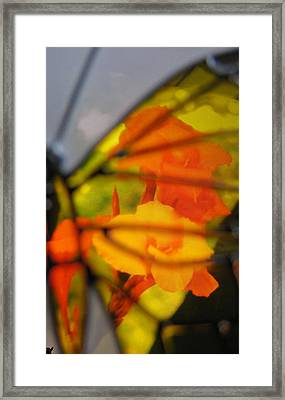 Butterfly Florals  Collection D Framed Print by Debra     Vatalaro