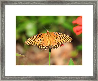 Butterfly Flower Framed Print by Cathy Harper