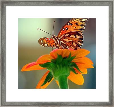 Butterfly Flower Framed Print by Dottie Dees