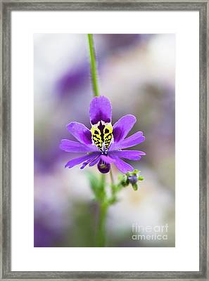 Butterfly Flower Framed Print by Tim Gainey