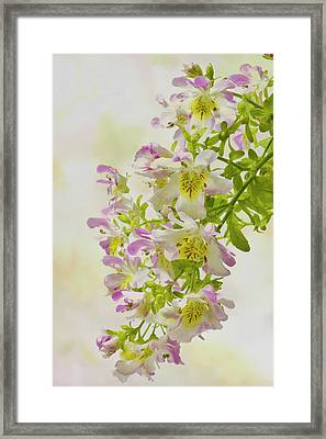 Butterfly Flowers  Framed Print by Sandra Foster