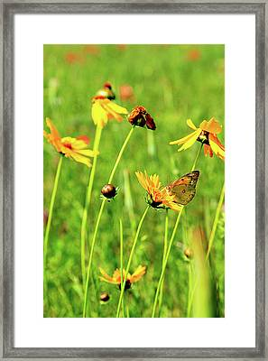 Butterfly Freedom Framed Print by Toni Hopper
