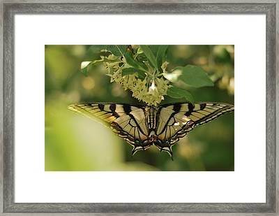 Framed Print featuring the photograph Butterfly From Another Side by Susan Capuano