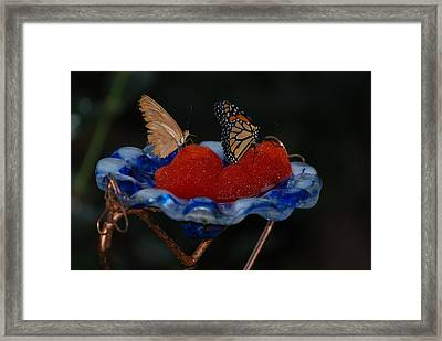 Framed Print featuring the photograph Butterfly Fruit by Richard Bryce and Family