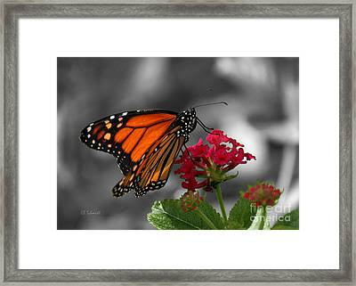 Framed Print featuring the photograph Butterfly Garden 01 - Monarch by E B Schmidt